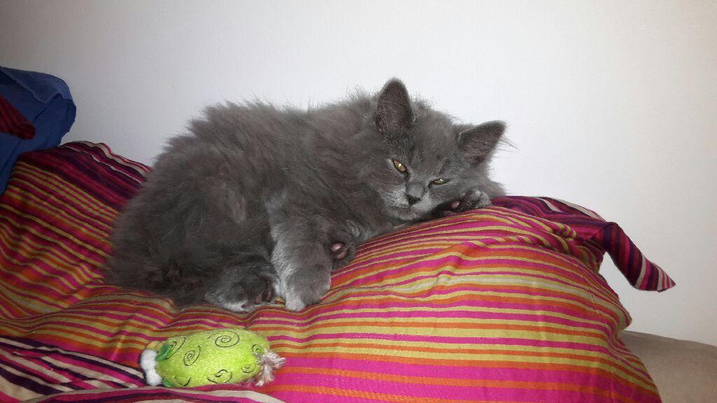 Lancelot, 3 months