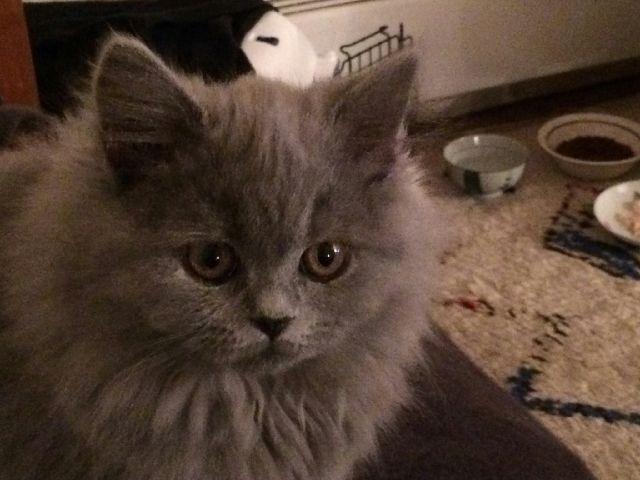 Lucette, 3 months