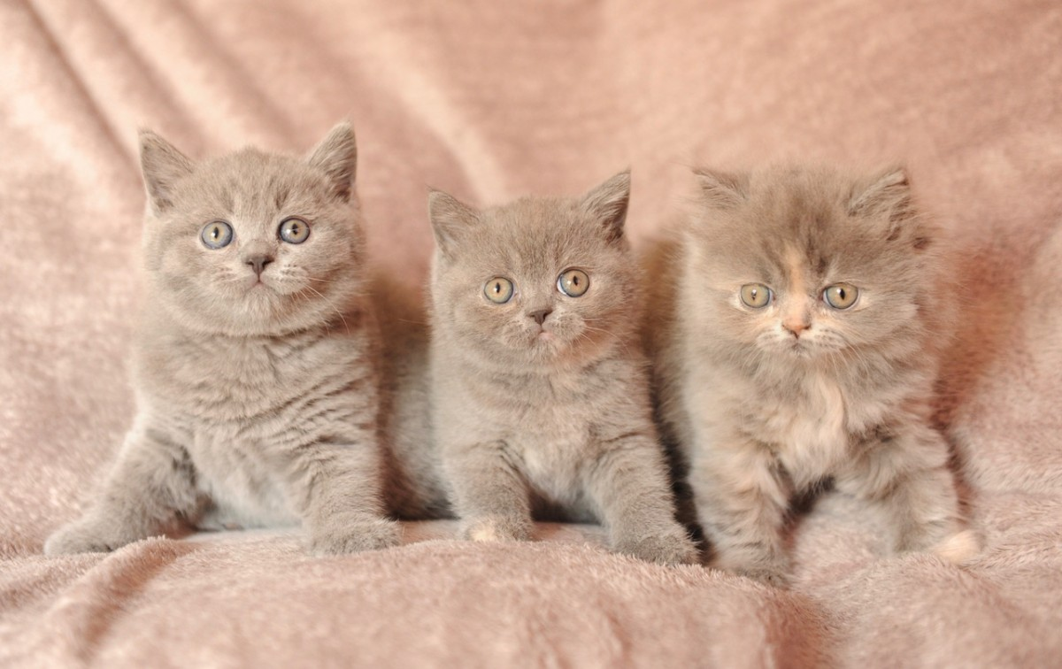 Chatons, 7 semaines